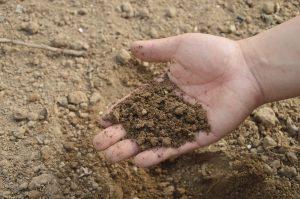 soil-766281_1920 soil hands